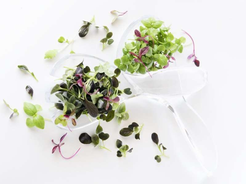 Micro greens: miniature vitamin bombs