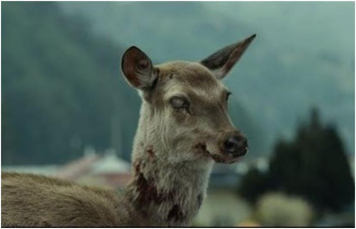Is it the Apocalypse? Zombie deer could infect humans