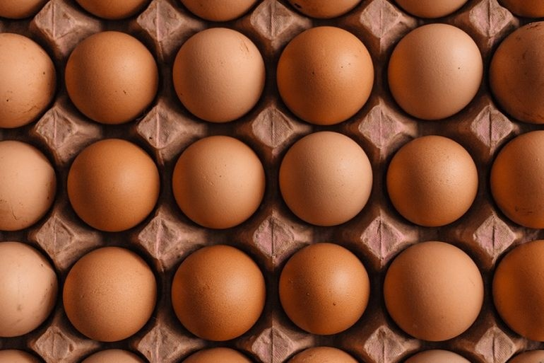 What is the best source of protein?