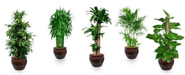 feng-shui-bamboo-benefits